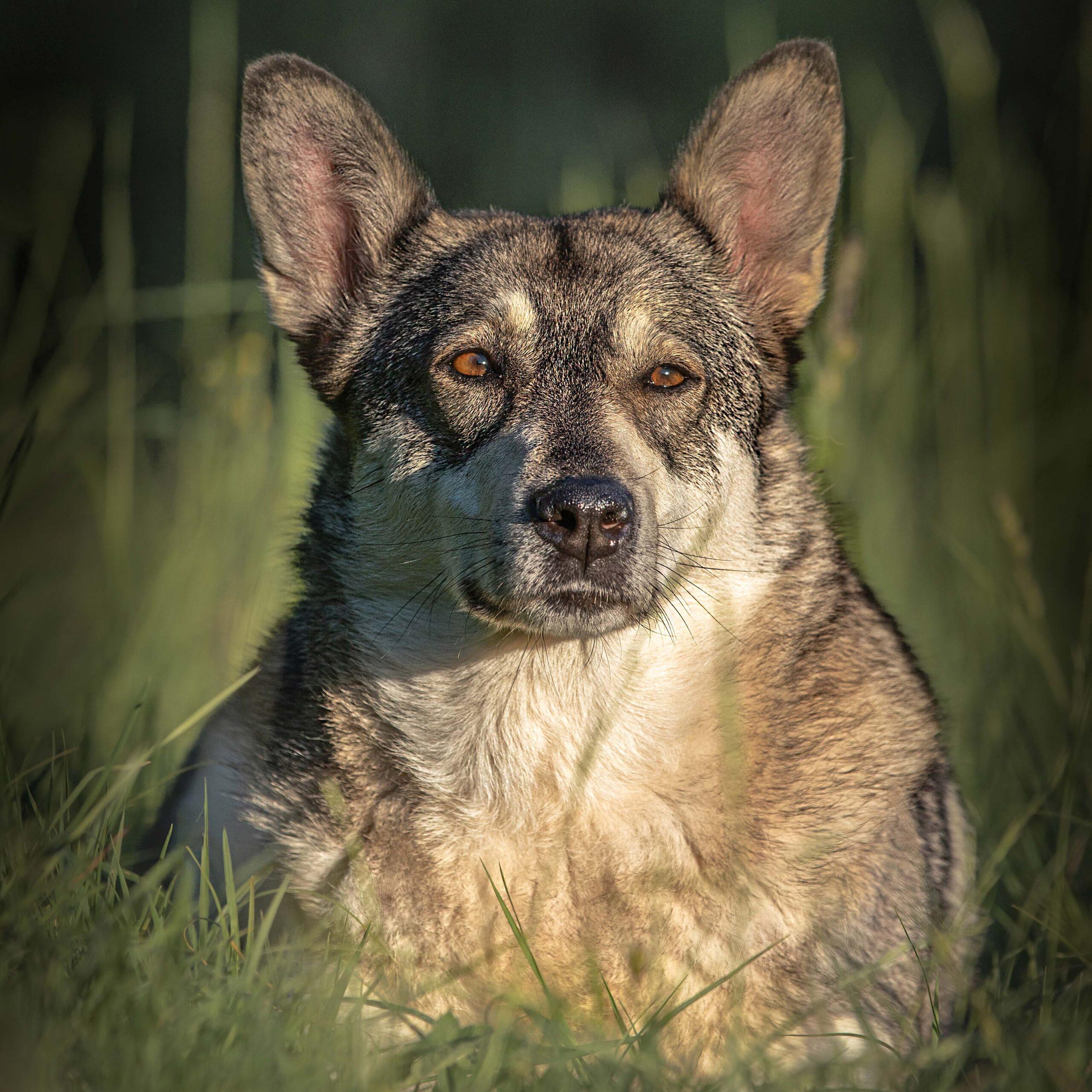 huisdieren-fotoshoot